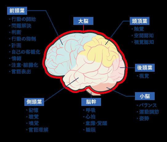 評価 機能 高 脳 次 障害